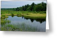 Lake And Bog Greeting Card