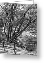 Lake Bench In Black And White Greeting Card