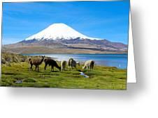 Lake Chungara Chilean Andes Greeting Card by Kurt Van Wagner