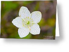 Lake Huron Wildflower Greeting Card