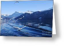 Lake Lucerne Seagulls Greeting Card