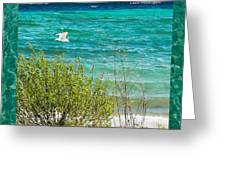 Lake Michigan Seagull In Flight Greeting Card