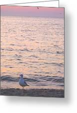Lake Michigan Sunset With Birds Greeting Card