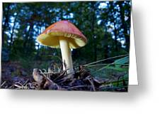 Lake Powhattan Mushroom Greeting Card