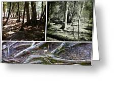 Lake Superior Hiking Trail Greeting Card