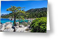 Lake Tahoe Bonsai Tree Greeting Card by Scott McGuire