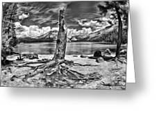 Lake Tenaya Giant Stump Black And White Greeting Card