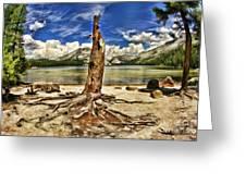 Lake Tenaya Giant Stump Greeting Card