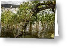 Lake Tree Greeting Card