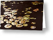 Lake Washington Lily Pad 10 Greeting Card