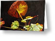 Lake Washington Lily Pad 18 Greeting Card