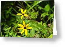 Lake Winfield Scott Wild Black-eyed Susan Flowers Greeting Card