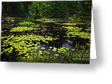Lake With Lily Pads Greeting Card