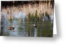 Lakeside - Mallard Greeting Card