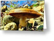 Lakeside Mushroom  Greeting Card