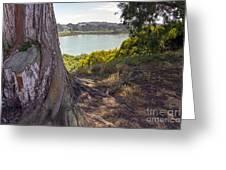 Lakeside Tree Greeting Card
