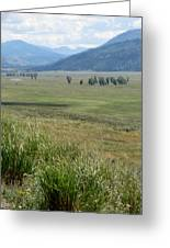 Lamar Valley Yellowstone National Park Greeting Card