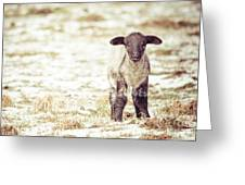 Lamb Greeting Card