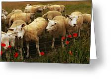 Lambs Greeting Card