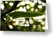 Lamentations 3 Greeting Card
