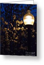 Lamplight 1 Greeting Card