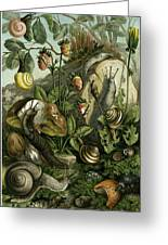 Land Molluscs Or Snails And Slugs Greeting Card