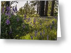 Land Of The Lupines Greeting Card