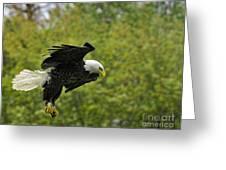 Landing Gear Down Greeting Card