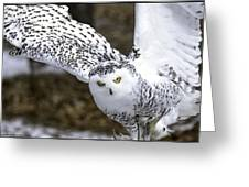 Landing Of The Snowy Owl Where Are You Harry Potter Greeting Card