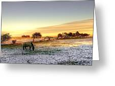 Landscape And Horse Greeting Card