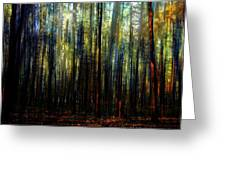 Landscape Forest Trees Tall Pine Greeting Card