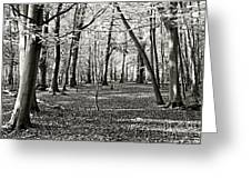 Landscape In The Woods Greeting Card