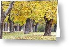 Landscape With Autumn Trees Greeting Card