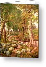 Landscape With Sheep Greeting Card