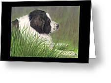 Landseer Newfoundland Dog In Grass Pets Animal Art Greeting Card