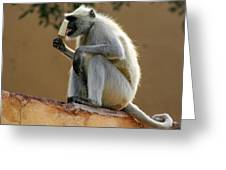 Langur With Kulfi Greeting Card