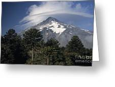 Lanin Volcano And Araucaria Trees Greeting Card
