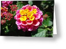 Lantana Blooms And Buds Greeting Card