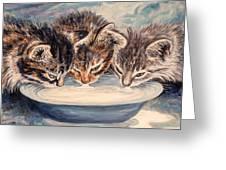 Lap Of Luxury Kittens Greeting Card