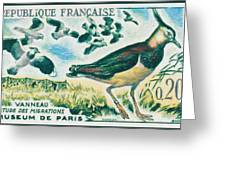 Lapwings Study Of Migration Museum Of Paris Greeting Card