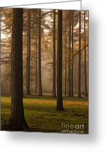 Larch Grove Greeting Card