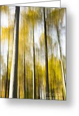 Larch In Abstract Greeting Card
