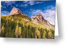 Larch On A Slope Greeting Card