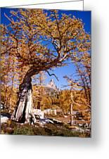 Larch Tree Frames Prusik Peak Greeting Card