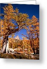 Larch Trees Frame Prusik Peak Greeting Card