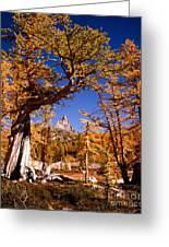 Larches Frame Prusik Peak Greeting Card