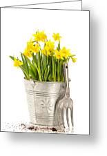 Large Bucket Of Daffodils Greeting Card by Amanda Elwell