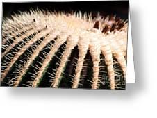 Large Cactus Ball Greeting Card
