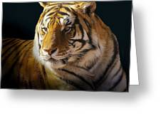 Large Cat Beauty Greeting Card