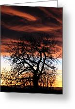 Large Cottonwood At Sunset Greeting Card